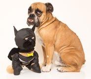 Bulldogge und sein Freund lizenzfreie stockfotos