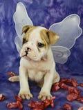 Bulldogge-Welpe mit Engels-Flügeln Lizenzfreies Stockfoto
