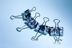 Bulldoggeclipblume - Ambiente Lizenzfreies Stockbild