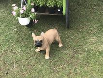 Bulldoggen-Figürchen lizenzfreie stockbilder