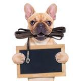bulldoggen lismar fransman Fotografering för Bildbyråer