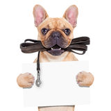 bulldoggen lismar fransman Royaltyfria Foton