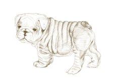 Bulldoggen skissar konst Royaltyfri Foto
