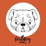 Bulldoggenkopf lokalisiert auf weißem Hintergrund Vector Illustration, Gestaltungselement für Karten, Fahnen und Flieger Stockfotos