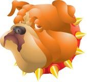 Bulldogghuvud Fotografering för Bildbyråer