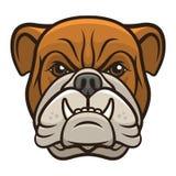 Bulldogghuvud Royaltyfria Foton