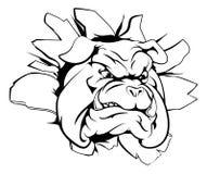 Bulldoggmaskot som bryter till och med väggen Royaltyfri Foto