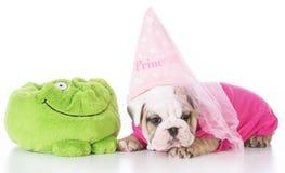 Bulldoggvalpprinsessa royaltyfri fotografi