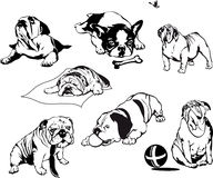 Bulldogs. Set of black and white vector illustrations Royalty Free Stock Image