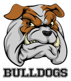 Bulldogs Sports Mascot Stock Photography