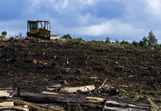 Bulldozer on logging field Stock Image