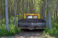 Bulldozer. Mechanical Site Preparation for Forestry. Planting poplars. Royalty Free Stock Photo