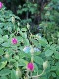 Bulle d?tendant parmi le buisson de fleur photo stock