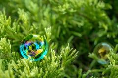 Bulle de savon sur l'herbe verte Image stock