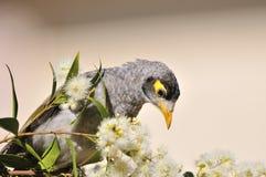 bullersam fågelgruvarbetare arkivbild