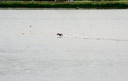 Bulles de l'eau pendant le vol des oiseaux Photographie stock libre de droits