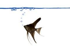 Bulles de poissons et d'air. Image libre de droits
