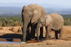Bulles de soufflement de maman d'éléphant Images libres de droits