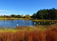 Bulles sur un étang Photographie stock