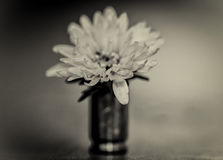 Bullet and flower Stock Images