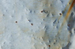 Bullet Holes in Aged Sheet Metal Stock Images
