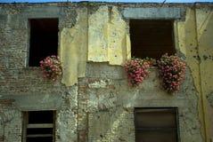 Bullet tracks with flower, Vukovar, Croatia Royalty Free Stock Image