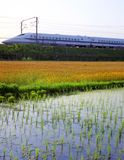 Bullet Train Passing By The Rice Paddy Royalty Free Stock Image