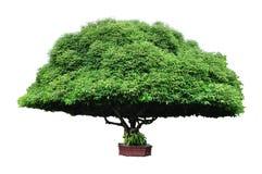 Free Bullet Wood Tree Stock Image - 16207211