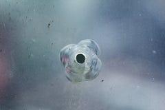 Bullethole d'armes à feu sur le verre des balles, fond de fissures Photos libres de droits