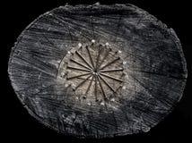 Bullette per suole del ferro sul troncone di legno Stile maschio brutale Anelli dei chiodi Immagine Stock Libera da Diritti