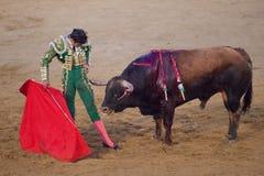 Bullfigher risking. Bullfhighter Perera, approaching the bull Stock Photography