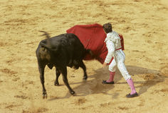 Bullfight Imagem de Stock Royalty Free