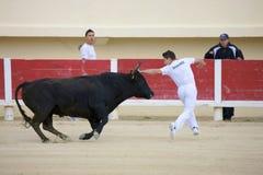 Bullfight Royalty Free Stock Photos