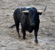bullfight imagens de stock