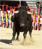bullfight Imagem de Stock