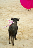 Bullfight Stockbild