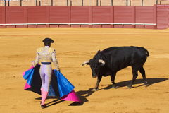 Bullfight. A bull vs a man Stock Photography