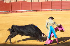 Bullfight. A bull vs a man Stock Images