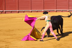 Bullfight. A bull vs a man Royalty Free Stock Photos