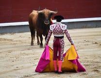Bullfight. In spain in spanish bullring arena with big bull Stock Photography