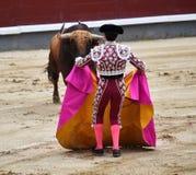 Bullfight. In spain in spanish bullring arena with big bull Royalty Free Stock Image