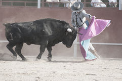 Bullfight. Fighting bull picture from Spain. Black bull. Torero Royalty Free Stock Photography