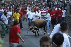 Bullfight 036 Stock Image