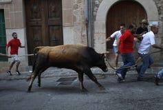 Bullfight 013 Stock Images