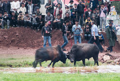 Bullfight pochodnia festiwal fotografia stock