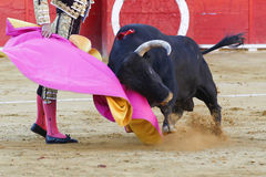 Bullfight Royalty Free Stock Images