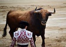 Bullfight. In spain in spanish bullring arena with big bull stock image