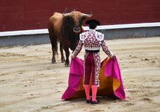 Bullfight. In spain in spanish bullring arena with big bull stock photo