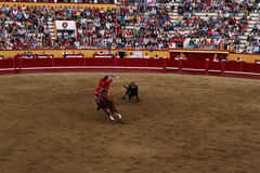 A Bullfight about to strike a bull. A skillfull bullfighter on horseback engages a bull in the Angra do Heroísmo arena during the Sanjoaninas. This festival of Royalty Free Stock Images