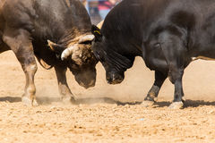Bullfight Stock Photography